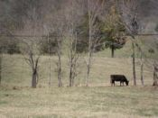 View of pasture and cattle